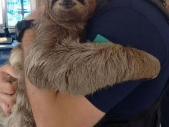 PRF resgata bicho preguiça na rodovia