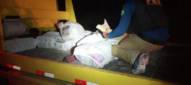 PRF apreende Maconha em caminhão acidentado